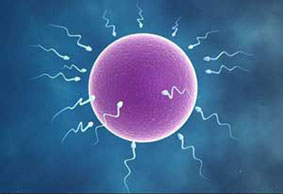 اخبار زناشویی,میزان رشد اسپرم ها در تابستان و زمستان,اسپرم مردانه و زنانه,تاثیر گرما بر رشد اسپرم ها,اثرات هوا بر اسپرم ها,تاثیر فصل ها بر اسپرم ها,اثرات فصل ها بررشد اسپرم ها