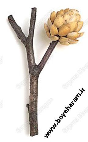 درختچه سازی