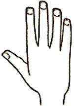 فال,فال دست,فال کف دست,کف بینی,فال کف دست بینی,آموزش گرفتن فال دست,انواع دست,انواع مدل های دست,فال دست بینی,فالگیری با دست,آموزش گرفتن فال با مشاهده دست