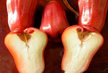 سیب گلی,تصاویر سیب گلی,میوه سیب گلی,عکس میوه سیب گلی,rose apple