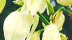 آموزش تصویری ساخت گل یوکای زیبا