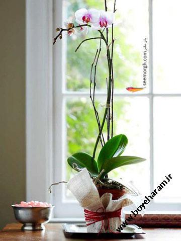 هدیه گل ارکید تزئینی برای ولنتاین