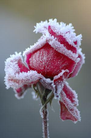 سایت شعر,شعر زمستان,اشعار عاشقانه,عاشقانه ترین شعر ها,اس ام اس های عاشقانه,متن های عاشقانه,عاشقانه ترین مطالب,شعر های جدیدو غمگین,شعر های مفهومی