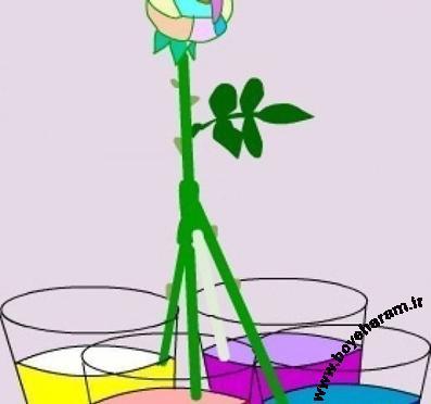 رنگ کردن گلبرگ های گل,پیوند زدن گل