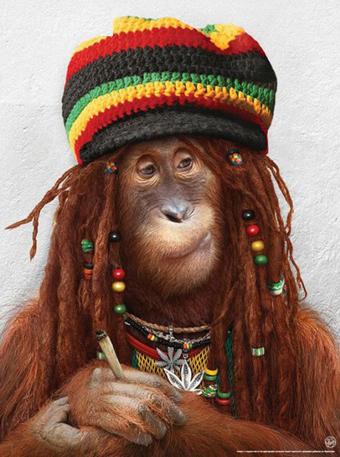میمون خنده دار,تصاویر خنده دار میمون,عکس خنده دار میمون
