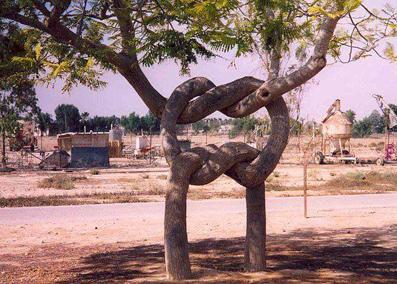 عکس عجیب درخت,تصاویر عجیب درخت,عکس شگفت انگیز
