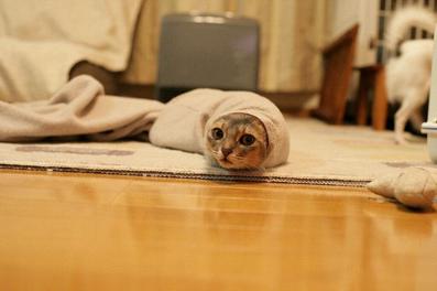 عکس خنده دار گربه,تصاویر طنز گربه,عکس طنز گربه
