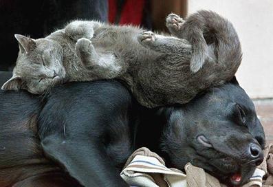 عکس سگ و گربه,تصاویر خنده دار سگ و گربه