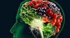 چه غذاهایی برای تقویت مغز مناسب است؟