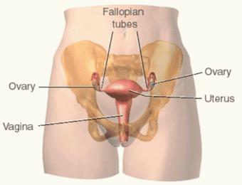 واژن,سفت کردن واژن پس از زایمان,عمل واژینوپلاستی,جراحی واژینوپلاستی