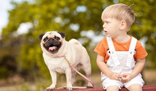 ازبین بردن ترس بچه ها از حیوانات,چرا کودکان از حیوانات میترسند؟