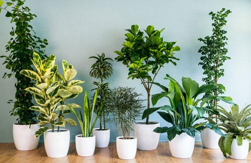 آموزش تزئین داخل خانه با گیاهان سنتی