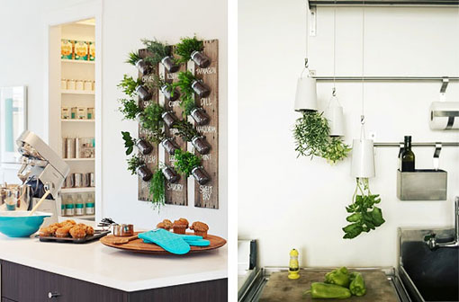پرورش گیاهان داخل خانه