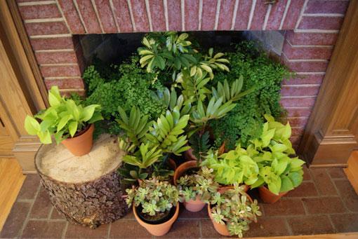 تزئین و چیدمان خانه,تزئین اتاق با گیاه