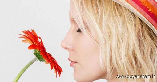 تاثیر عطر مرد برروی زن,اثرات عطر بر میزان عشق
