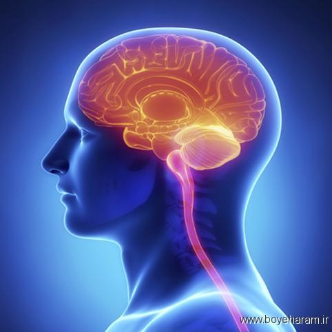 مغز استخوان,همه چیز در مورد مغز استخوان,درمان بیماری های مغزی