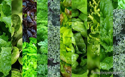 ,فواید برگ خردل,سبزی های برگ معدن مواد معدنی,موارد استفاده بوک چوی
