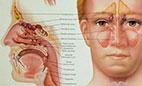 علایم و درمان سینوزیت