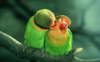 عاشقانه ترین تصاویر جهان,عاشقانه ترین عکس های جهان,تصاویر عاشقانه دختر و پسر