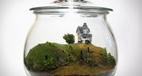 آموزش ساخت تراریوم تزئینی برای خانه