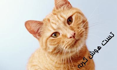 تست هوش,معما و چیستان,معماهای تصویری,تست هوش تصویری,تست هوش گربه ها