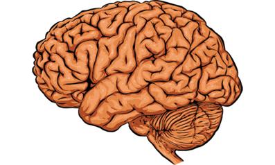محركهاي فيزيكي,فشار خون,دستگاه گوارش,تورم بافت مغز
