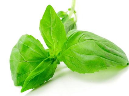 فواید درمانی گیاه ریحانه,خواص درمانی گیاه ریحانه,خواص ریحان