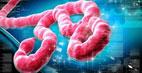 همه چیز در مورد بیماری ابولا و راه درمان